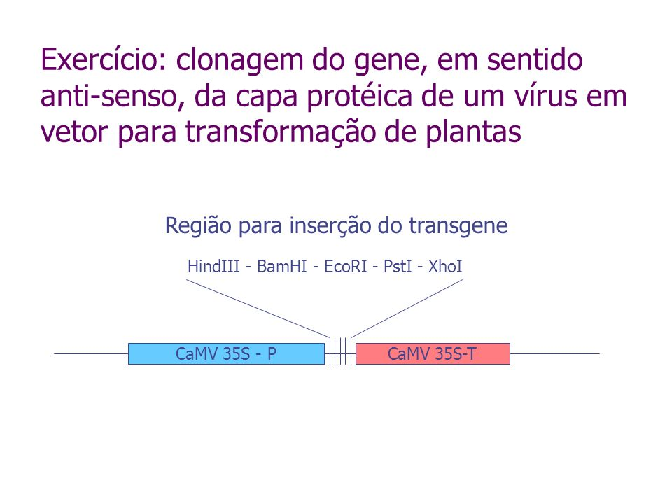 Exercício: clonagem do gene, em sentido anti-senso, da capa protéica de um vírus em vetor para transformação de plantas