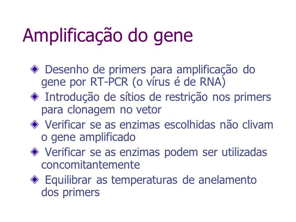 Amplificação do gene Desenho de primers para amplificação do gene por RT-PCR (o vírus é de RNA)
