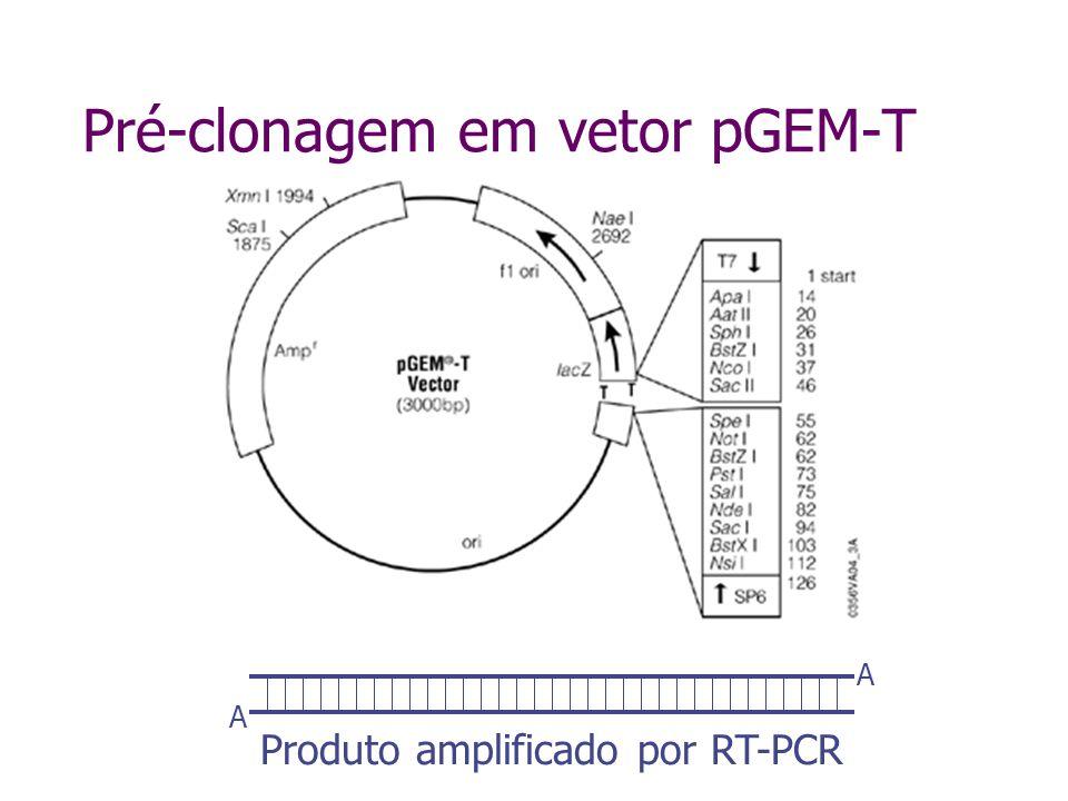 Pré-clonagem em vetor pGEM-T