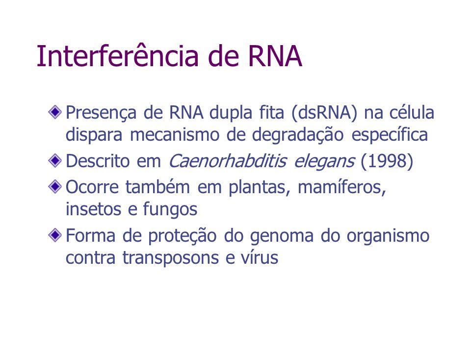 Interferência de RNA Presença de RNA dupla fita (dsRNA) na célula dispara mecanismo de degradação específica.