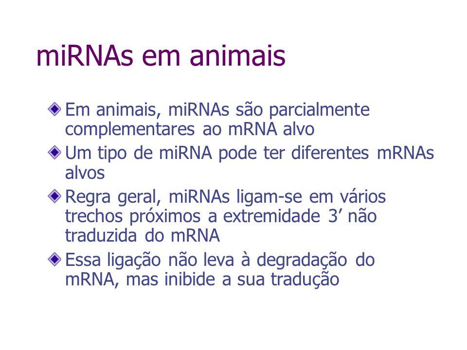 miRNAs em animais Em animais, miRNAs são parcialmente complementares ao mRNA alvo. Um tipo de miRNA pode ter diferentes mRNAs alvos.
