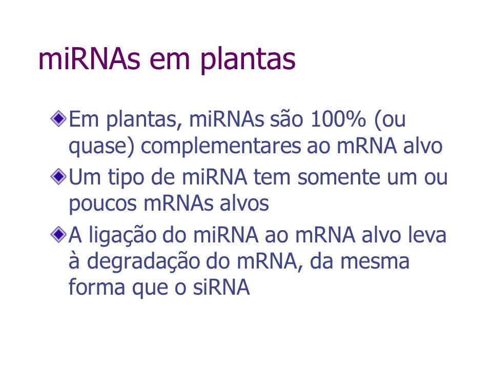 miRNAs em plantas Em plantas, miRNAs são 100% (ou quase) complementares ao mRNA alvo. Um tipo de miRNA tem somente um ou poucos mRNAs alvos.