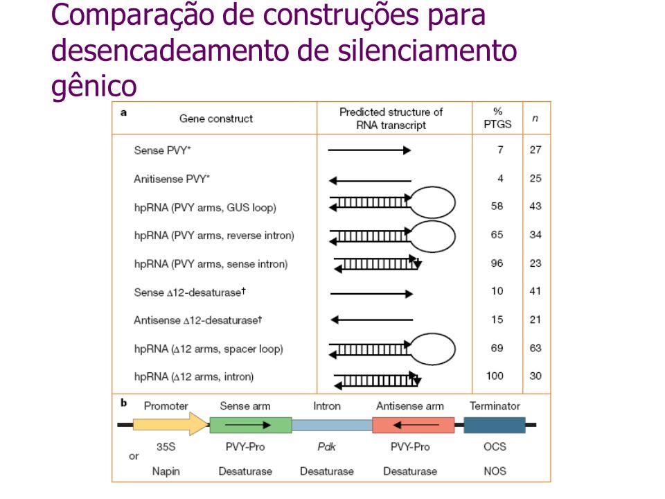 Comparação de construções para desencadeamento de silenciamento gênico