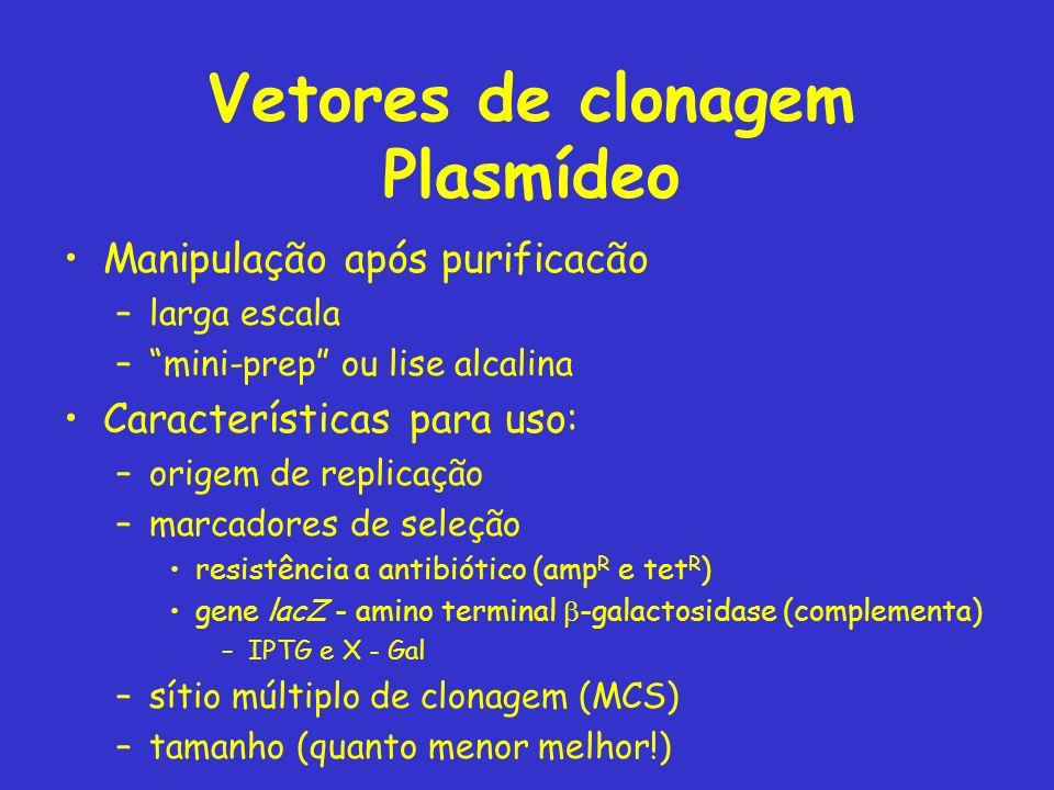 Vetores de clonagem Plasmídeo