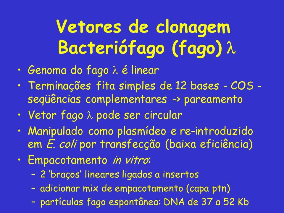 Vetores de clonagem Bacteriófago (fago) l