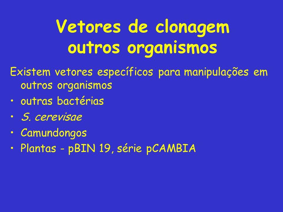 Vetores de clonagem outros organismos