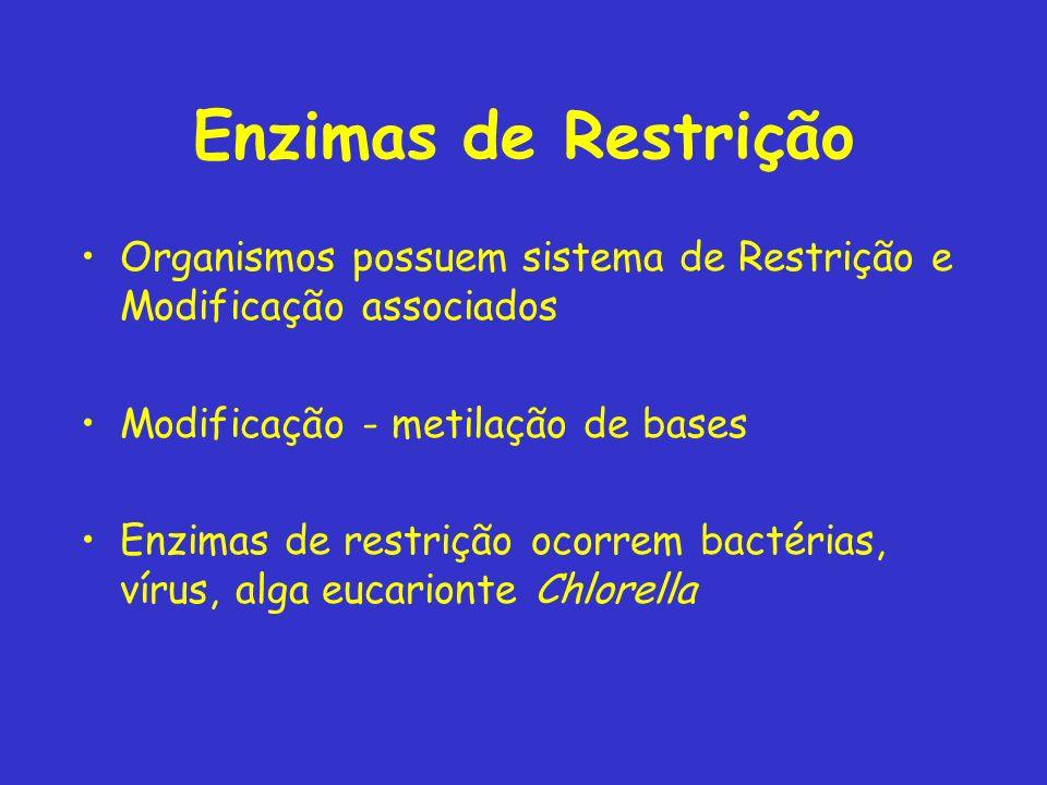 Enzimas de Restrição Organismos possuem sistema de Restrição e Modificação associados. Modificação - metilação de bases.