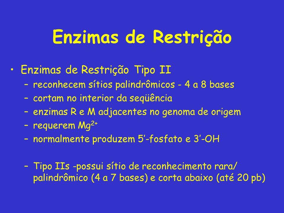 Enzimas de Restrição Enzimas de Restrição Tipo II