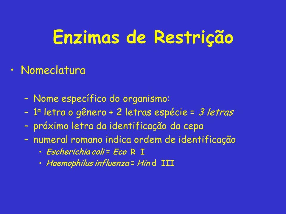 Enzimas de Restrição Nomeclatura Nome específico do organismo: