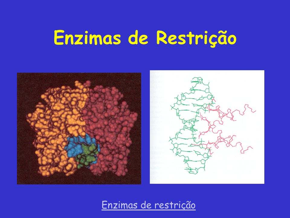 Enzimas de Restrição Enzimas de restrição