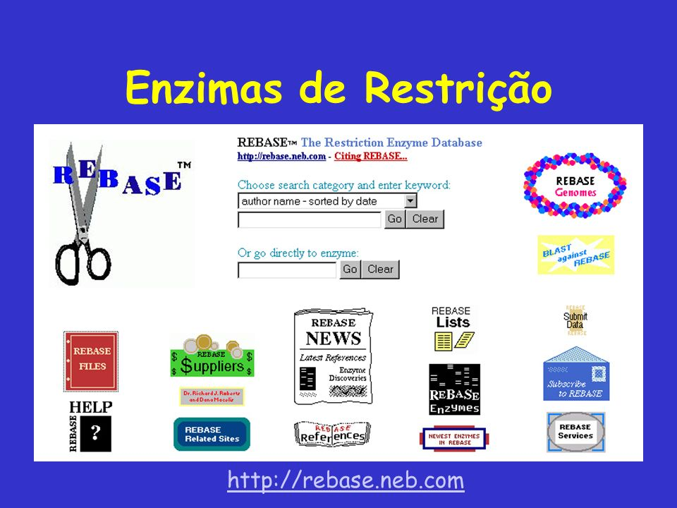 Enzimas de Restrição http://rebase.neb.com