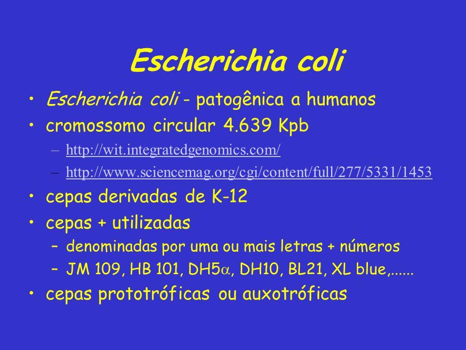 Escherichia coli Escherichia coli - patogênica a humanos
