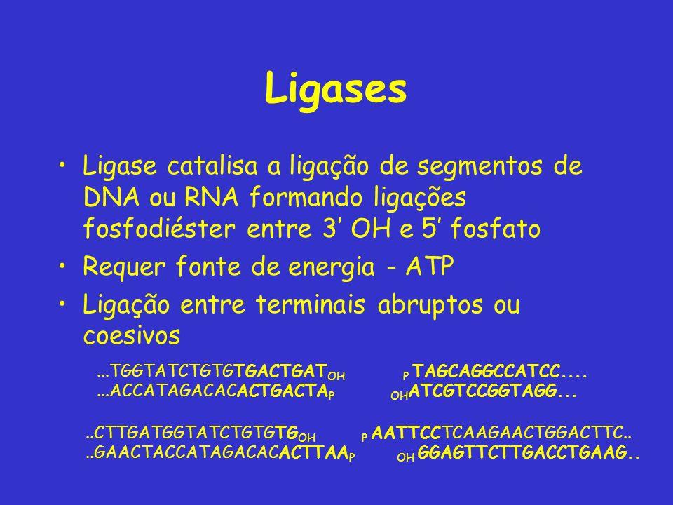 Ligases Ligase catalisa a ligação de segmentos de DNA ou RNA formando ligações fosfodiéster entre 3' OH e 5' fosfato.