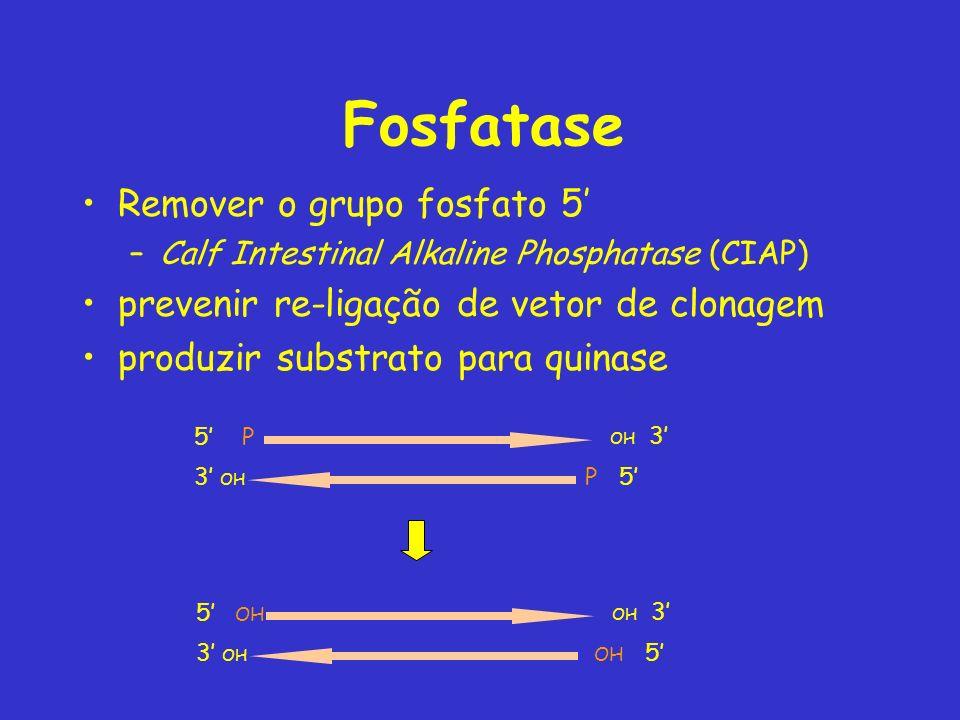 Fosfatase Remover o grupo fosfato 5'