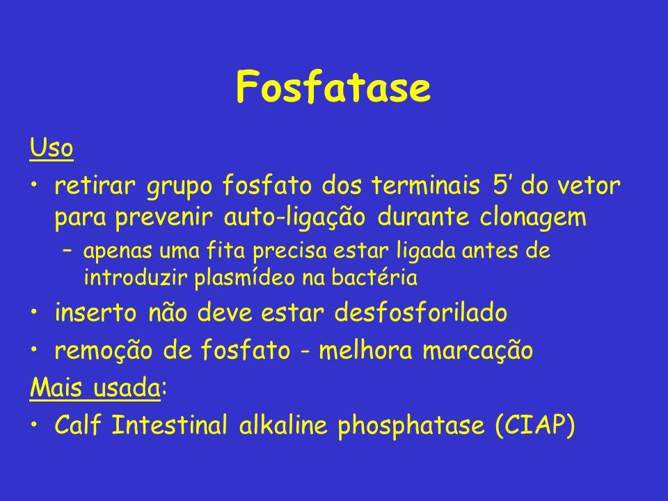Fosfatase Uso. retirar grupo fosfato dos terminais 5' do vetor para prevenir auto-ligação durante clonagem.