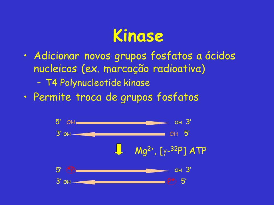 Kinase Adicionar novos grupos fosfatos a ácidos nucleicos (ex. marcação radioativa) T4 Polynucleotide kinase.