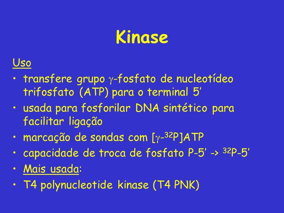 Kinase Uso. transfere grupo g-fosfato de nucleotídeo trifosfato (ATP) para o terminal 5' usada para fosforilar DNA sintético para facilitar ligação.