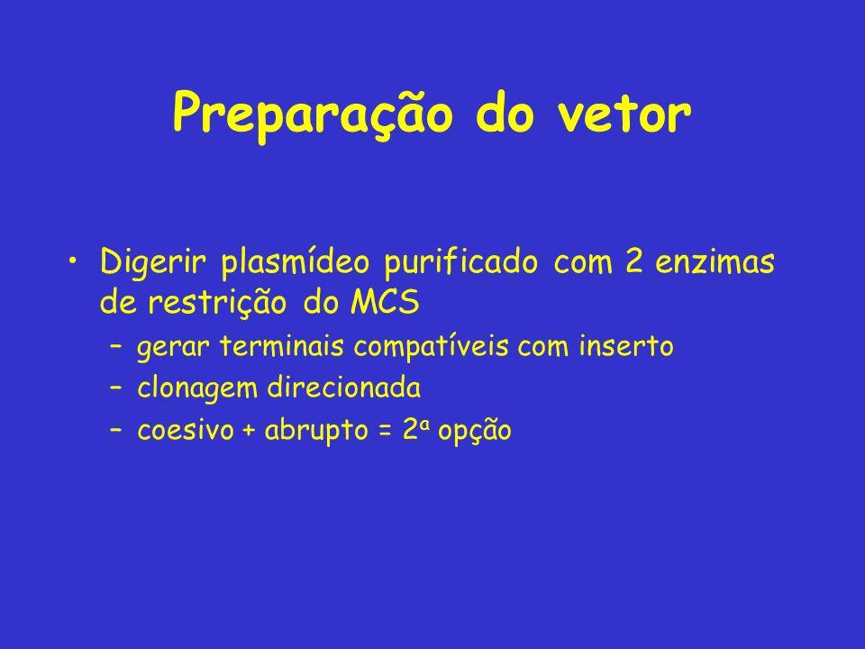 Preparação do vetor Digerir plasmídeo purificado com 2 enzimas de restrição do MCS. gerar terminais compatíveis com inserto.
