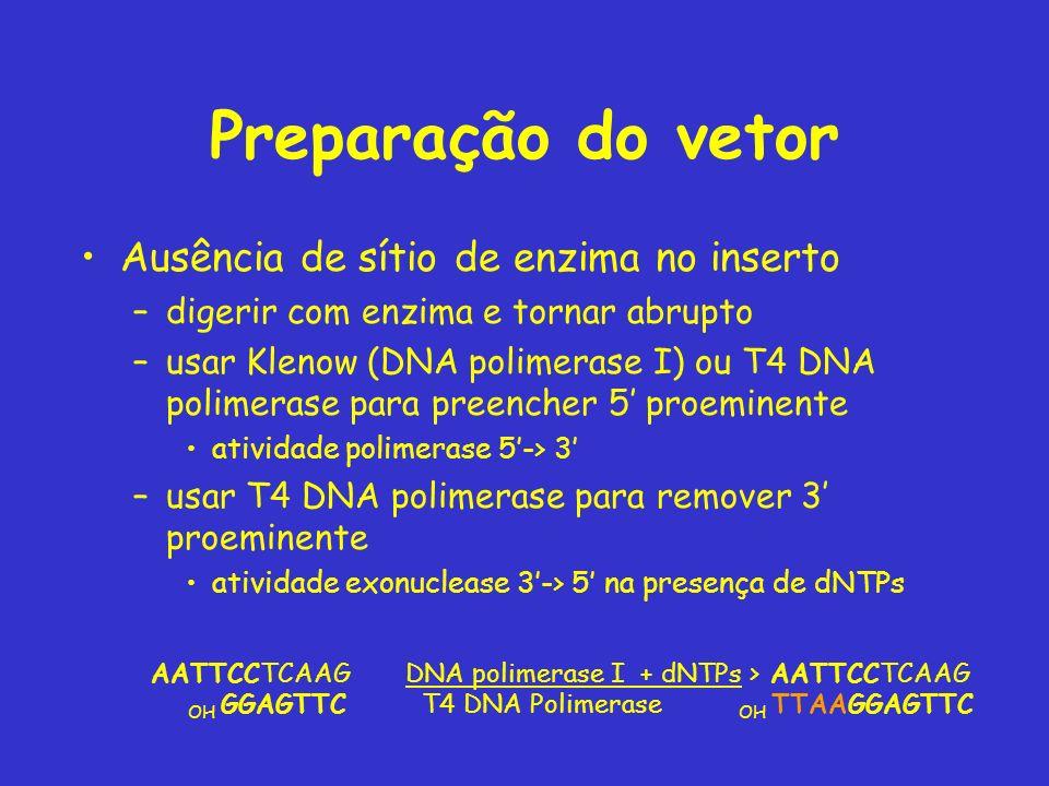 Preparação do vetor Ausência de sítio de enzima no inserto