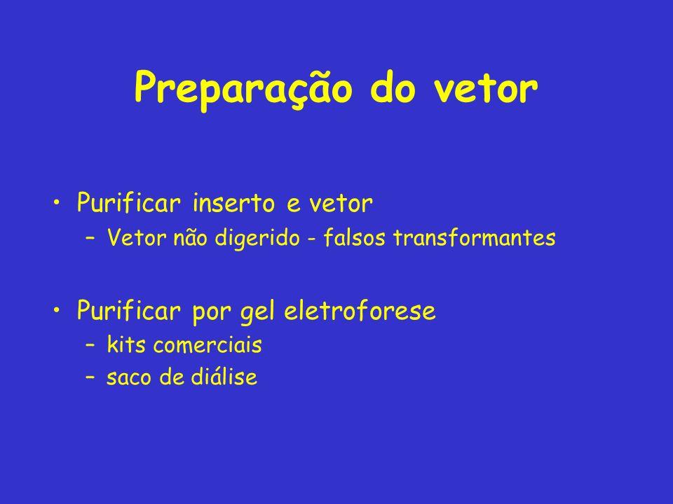 Preparação do vetor Purificar inserto e vetor