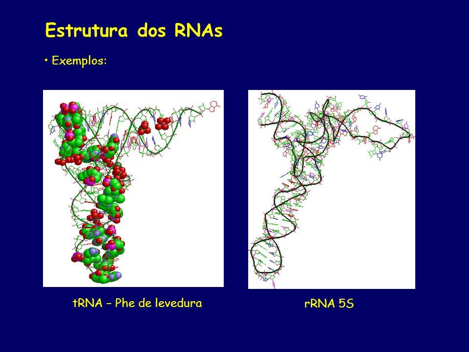 Estrutura dos RNAs Exemplos: tRNA – Phe de levedura rRNA 5S