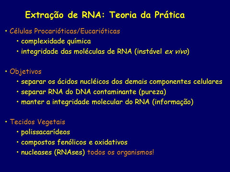 Extração de RNA: Teoria da Prática
