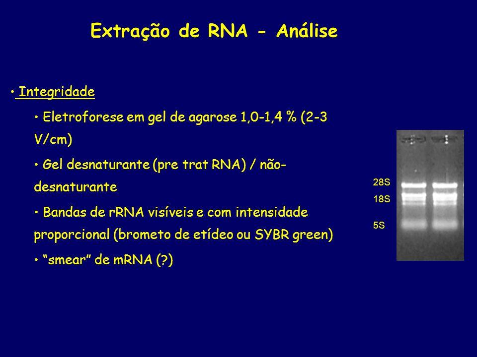 Extração de RNA - Análise