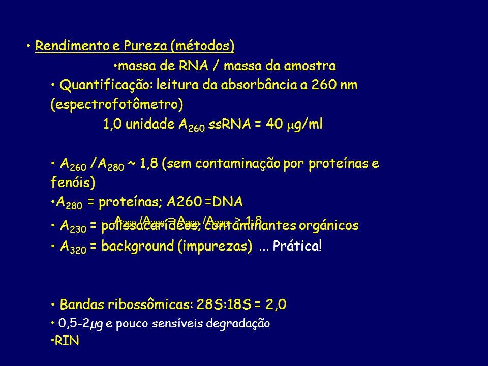 massa de RNA / massa da amostra