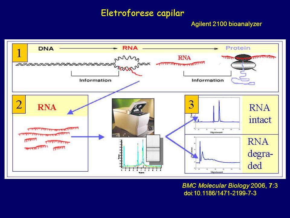 Eletroforese capilar Agilent 2100 bioanalyzer