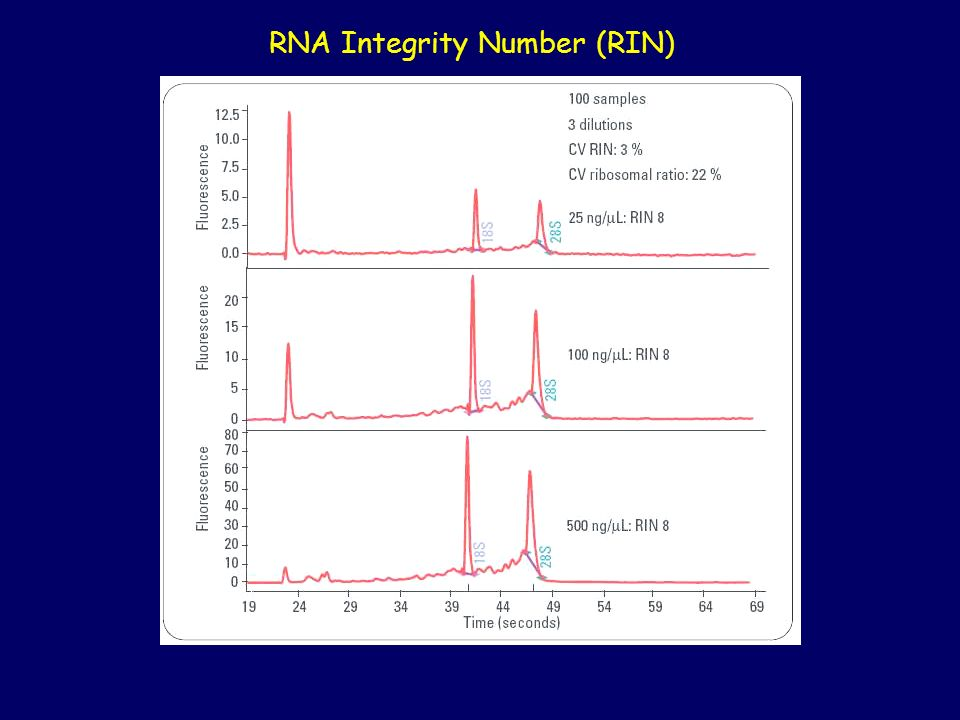 RNA Integrity Number (RIN)