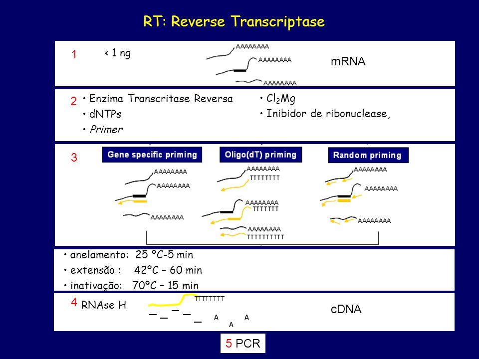 RT: Reverse Transcriptase
