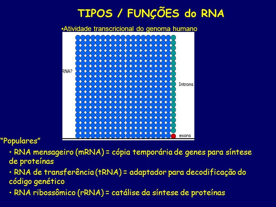 TIPOS / FUNÇÕES do RNA Populares