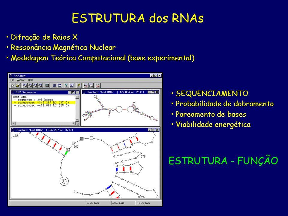 ESTRUTURA dos RNAs ESTRUTURA - FUNÇÃO Difração de Raios X