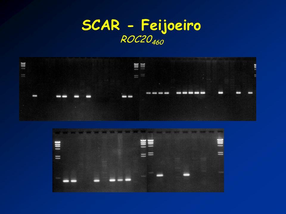 SCAR - Feijoeiro ROC20460