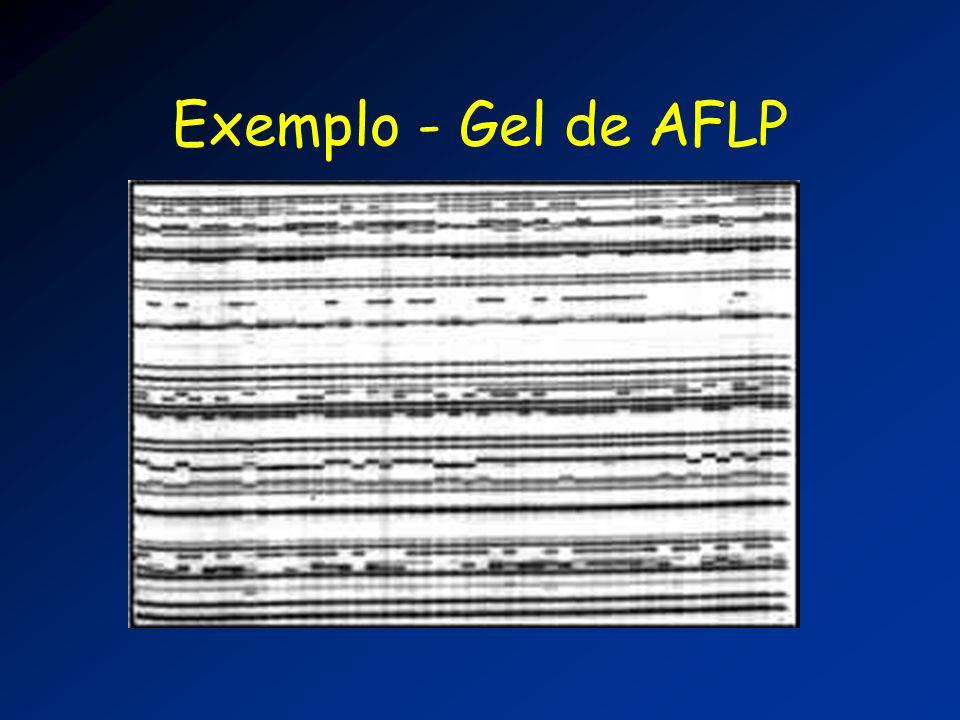 Exemplo - Gel de AFLP