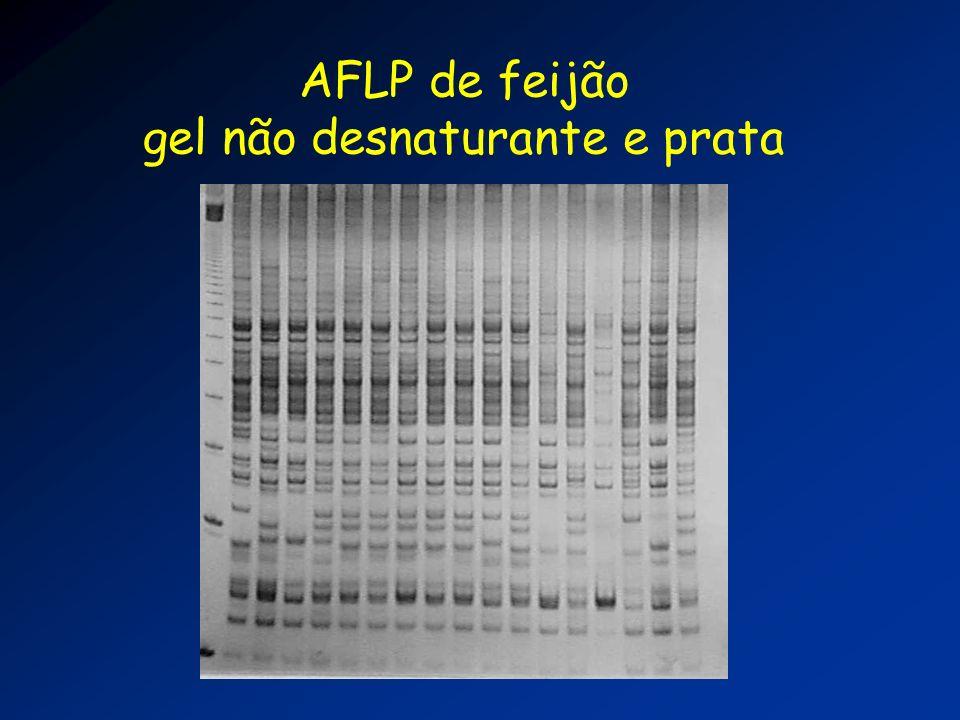 AFLP de feijão gel não desnaturante e prata