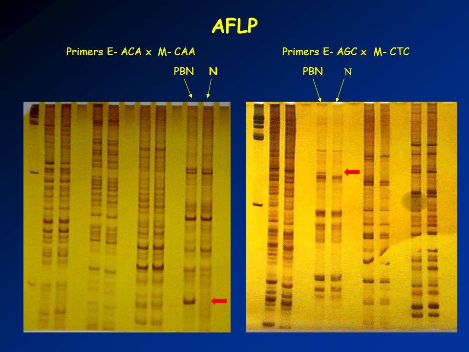 AFLP Primers E- ACA x M- CAA Primers E- AGC x M- CTC PBN N PBN N