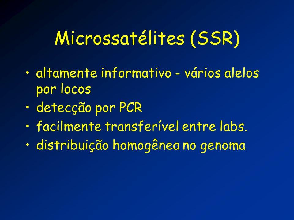 Microssatélites (SSR)
