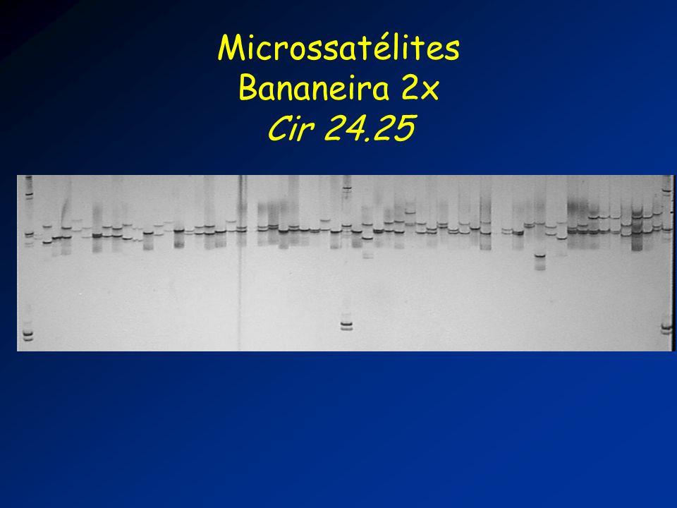 Microssatélites Bananeira 2x Cir 24.25
