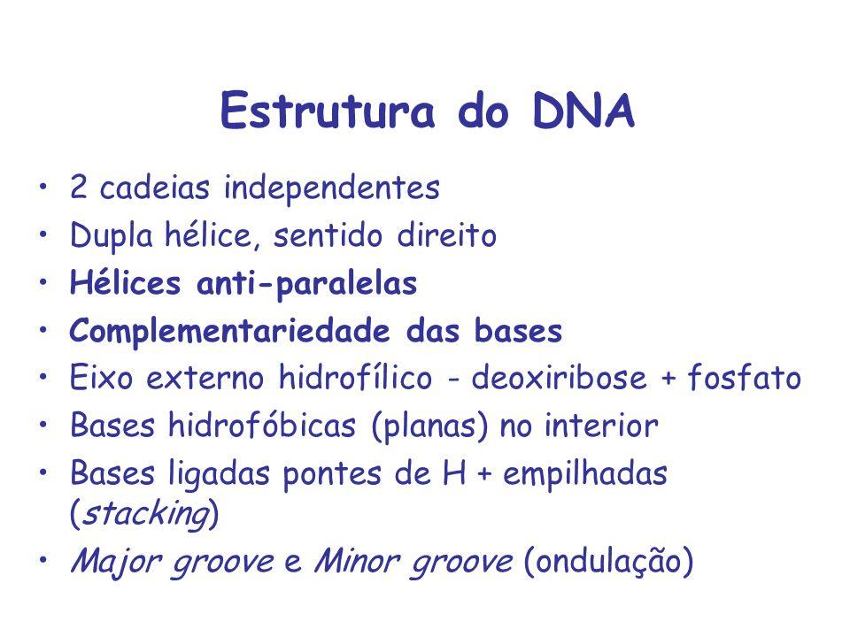 Estrutura do DNA 2 cadeias independentes Dupla hélice, sentido direito