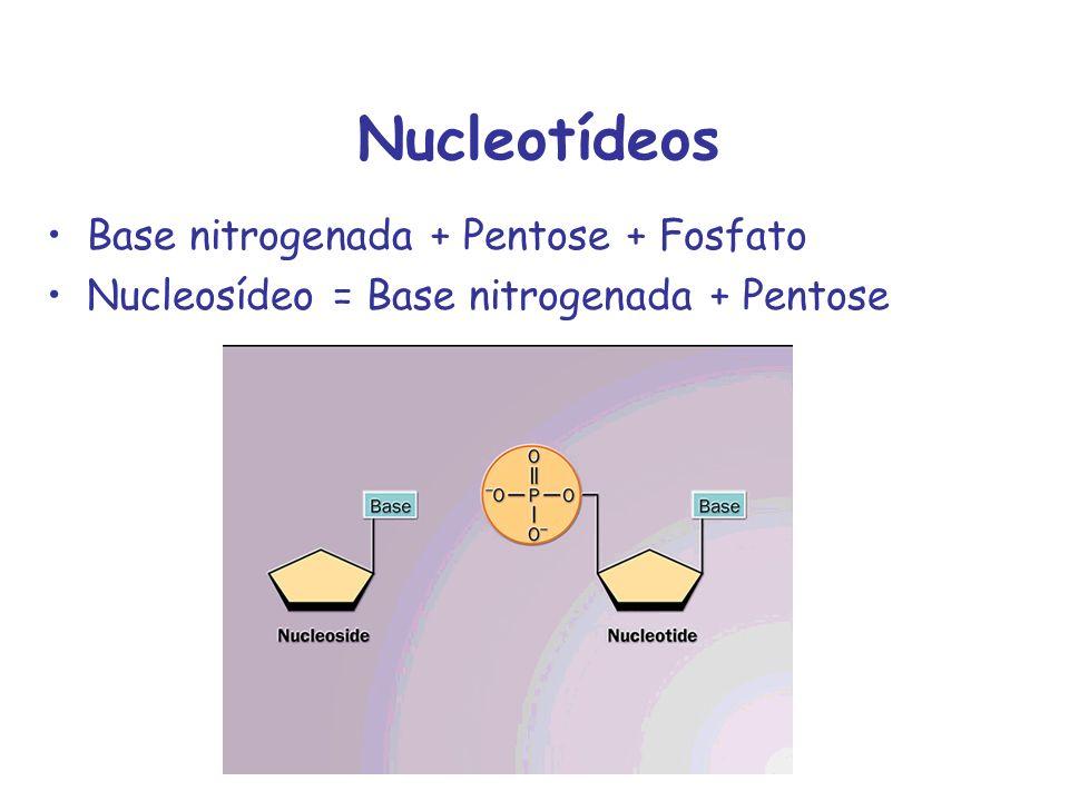 Nucleotídeos Base nitrogenada + Pentose + Fosfato