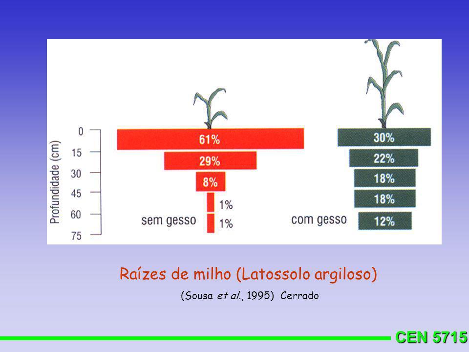 Raízes de milho (Latossolo argiloso)