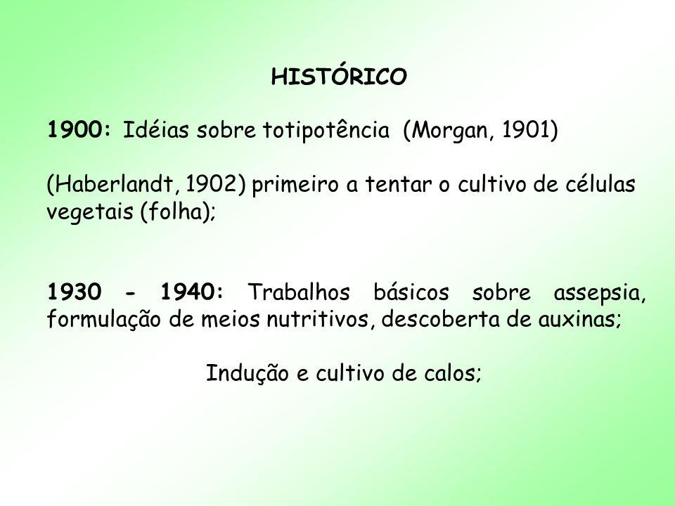 HISTÓRICO 1900: Idéias sobre totipotência (Morgan, 1901) (Haberlandt, 1902) primeiro a tentar o cultivo de células vegetais (folha);