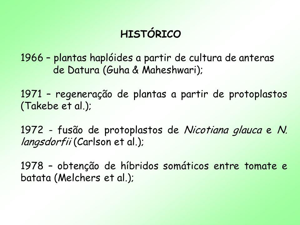 HISTÓRICO 1966 – plantas haplóides a partir de cultura de anteras. de Datura (Guha & Maheshwari);