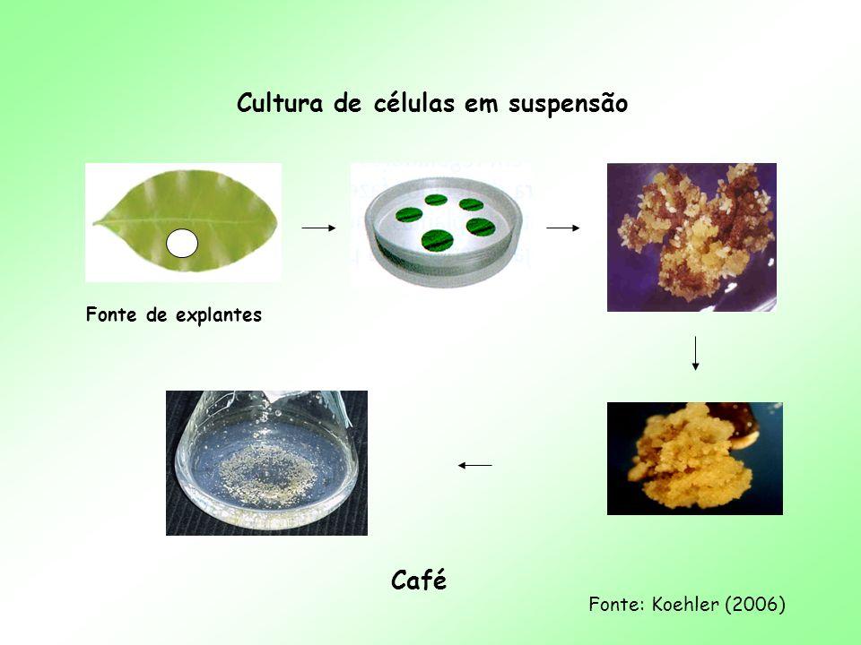 Cultura de células em suspensão