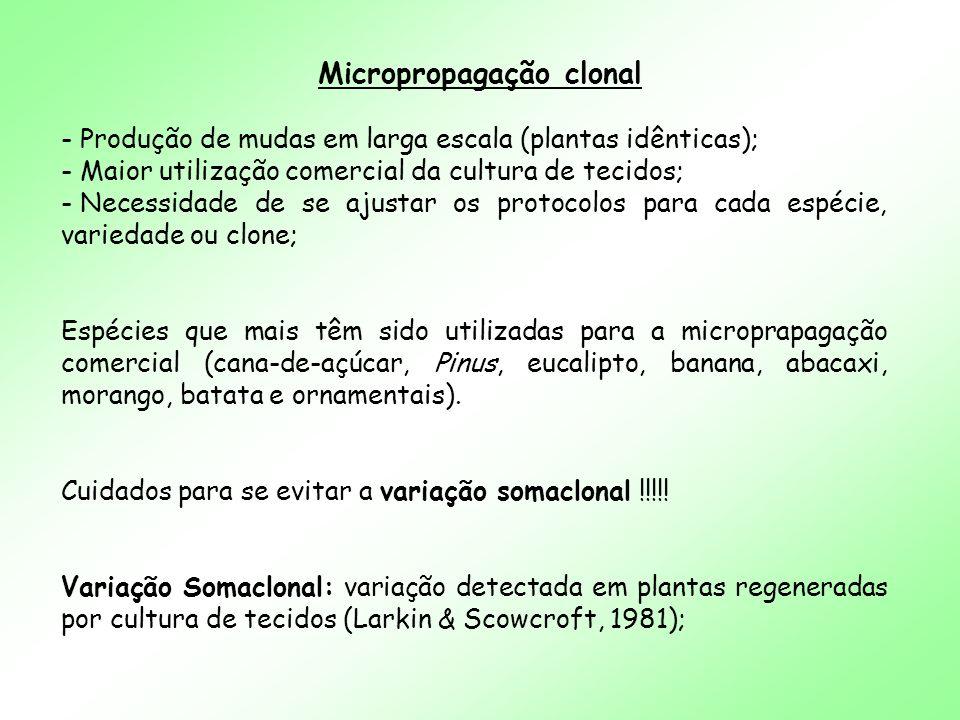 Micropropagação clonal