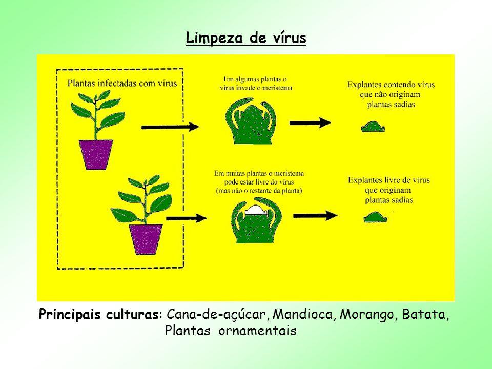 Principais culturas: Cana-de-açúcar, Mandioca, Morango, Batata,