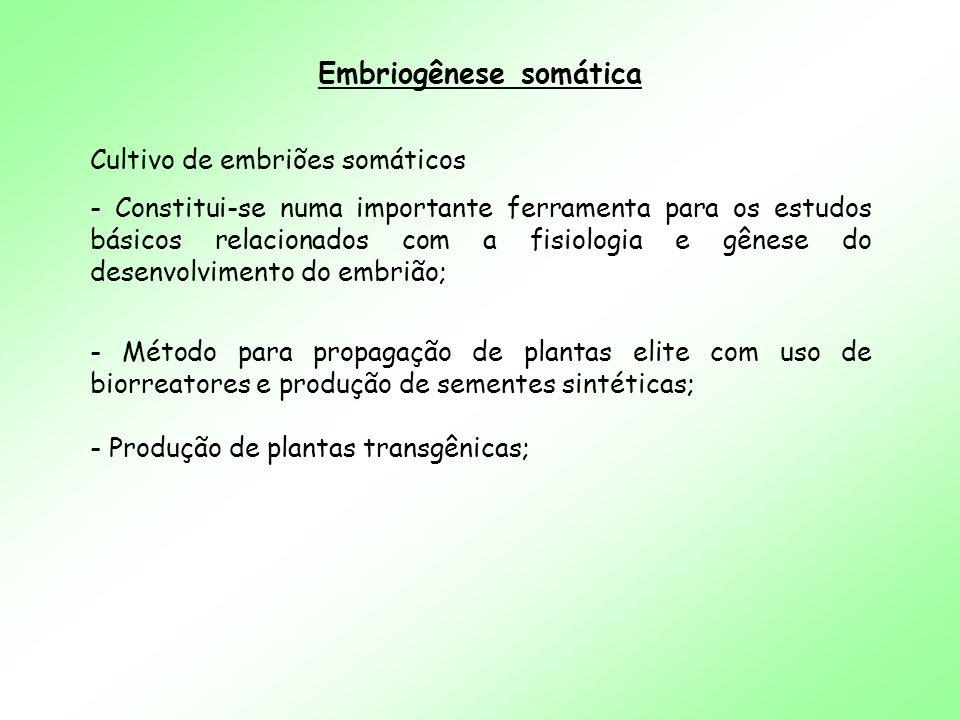 Embriogênese somática