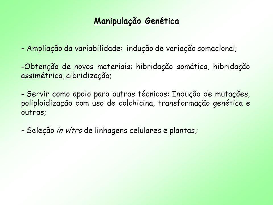 Manipulação Genética Ampliação da variabilidade: indução de variação somaclonal;