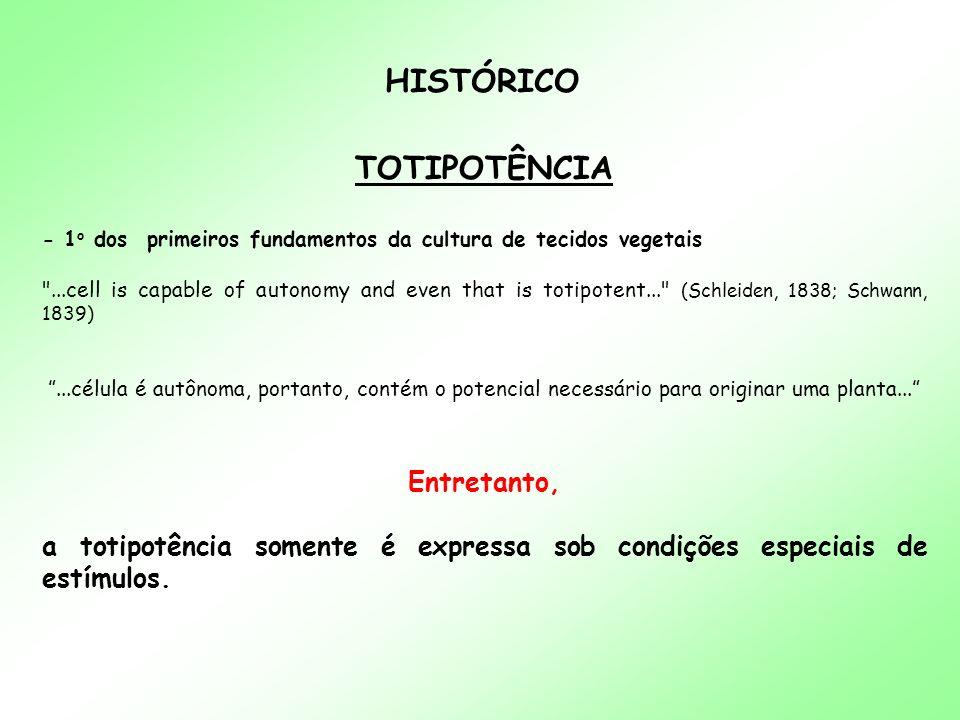 HISTÓRICO TOTIPOTÊNCIA